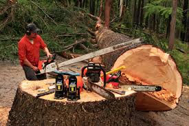 Large Tree Felling Geduld