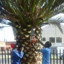 Cost-friendly Tree Feller Repair Johannesburg